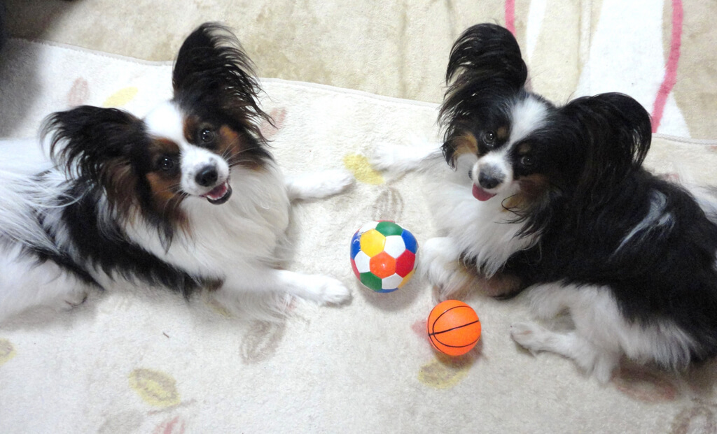 twins_dogs